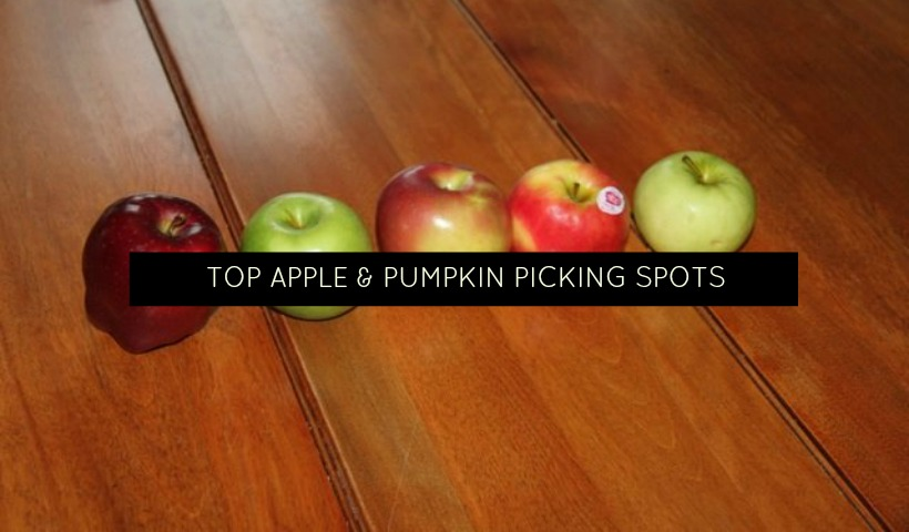 Top Apple And Pumpkin Picking Spots Around Oakville
