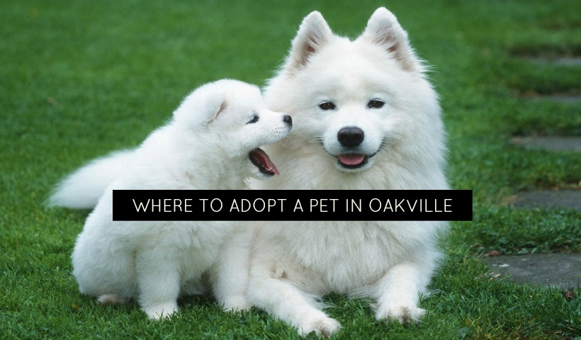 Where To Adopt A Pet In Oakville